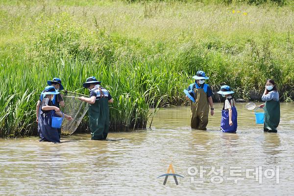 안성시 푸른씨앗 생태강사팀, 환경의 날 기념하여 생물다양성 대탐사 실시. /사진=안성시 제공
